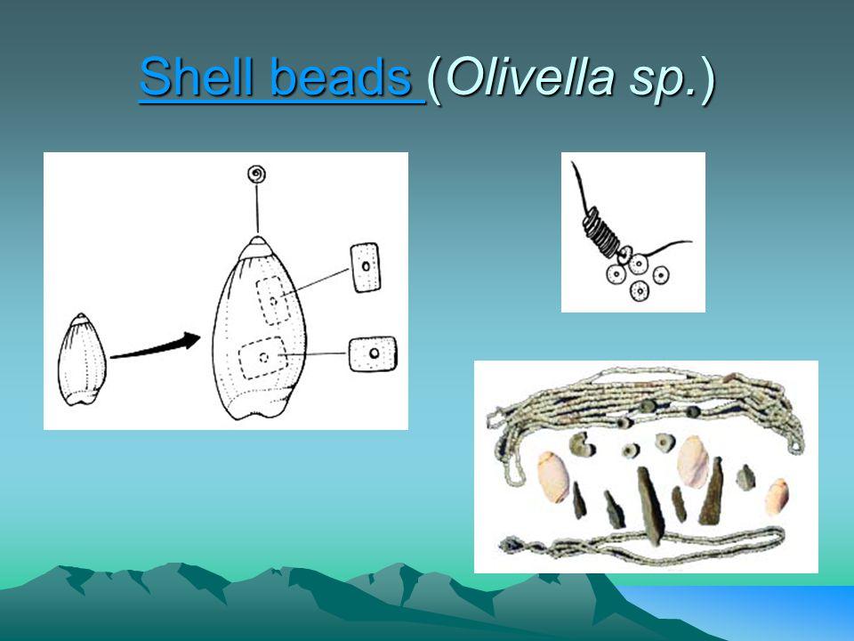 Shell beads Shell beads (Olivella sp.) Shell beads
