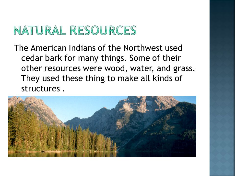 The American Indians of the Northwest used cedar bark for many things.