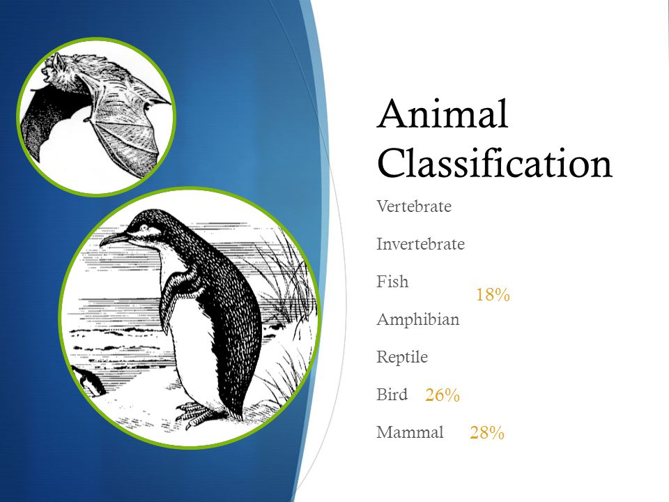Animal Classification Vertebrate Invertebrate Fish Amphibian Reptile Bird Mammal 26% 28% 18%