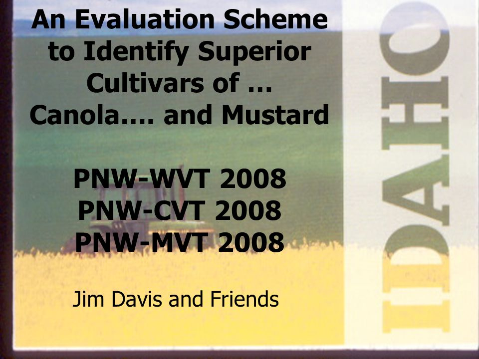 An Evaluation Scheme to Identify Superior Cultivars of … Canola…. and Mustard PNW-WVT 2008 PNW-CVT 2008 PNW-MVT 2008 Jim Davis and Friends