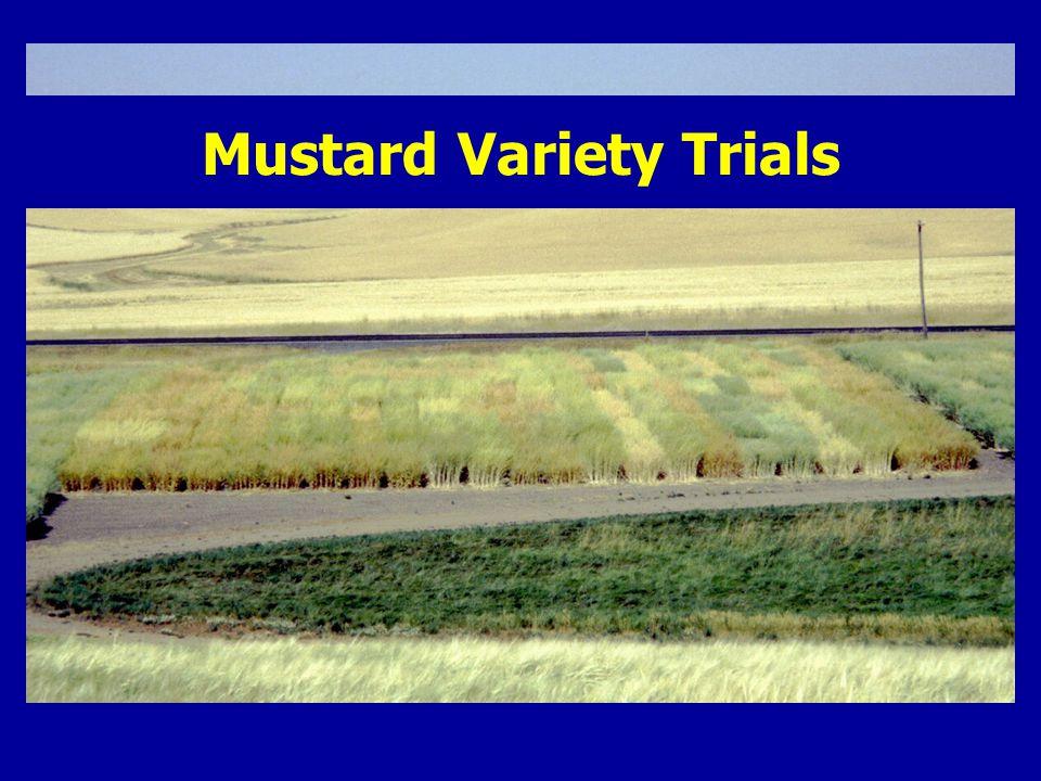 Mustard Variety Trials