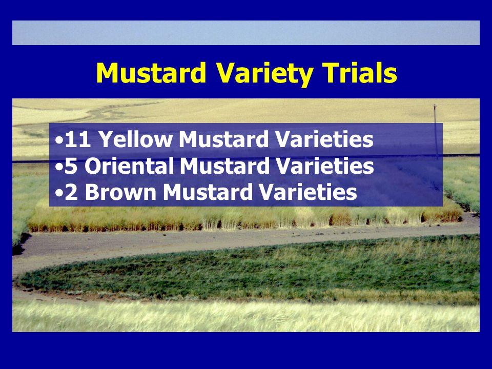 11 Yellow Mustard Varieties 5 Oriental Mustard Varieties 2 Brown Mustard Varieties