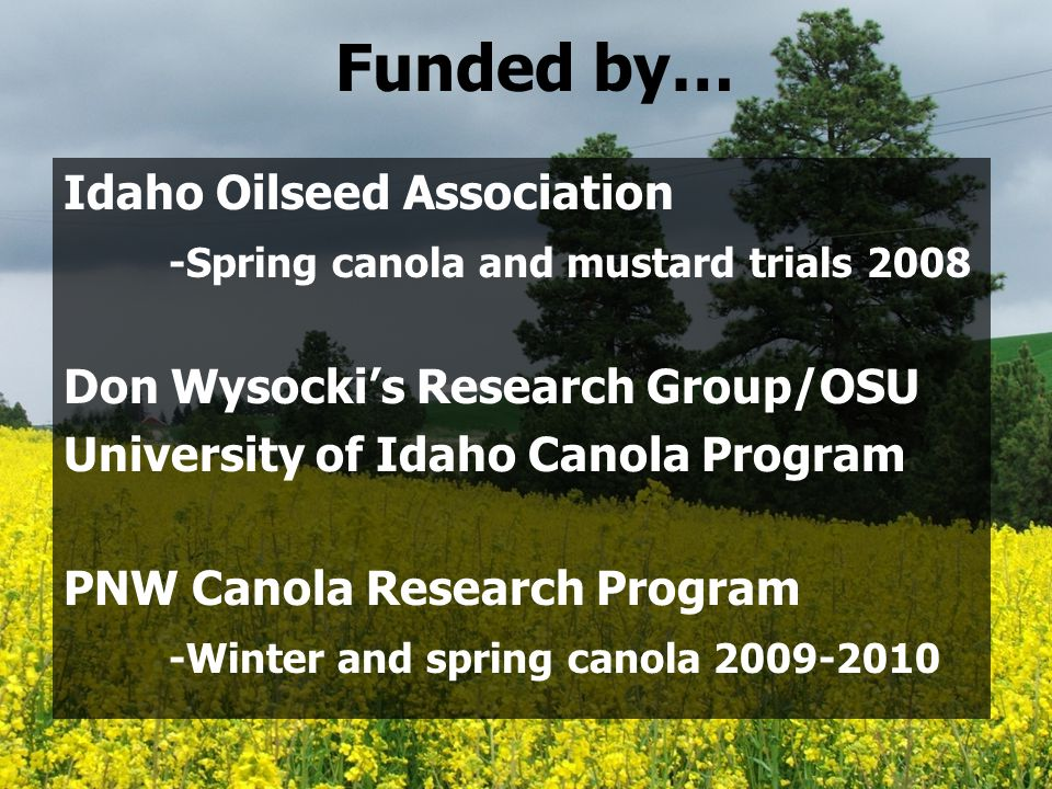 Funded by… Idaho Oilseed Association -Spring canola and mustard trials 2008 Don Wysocki's Research Group/OSU University of Idaho Canola Program PNW Canola Research Program -Winter and spring canola 2009-2010