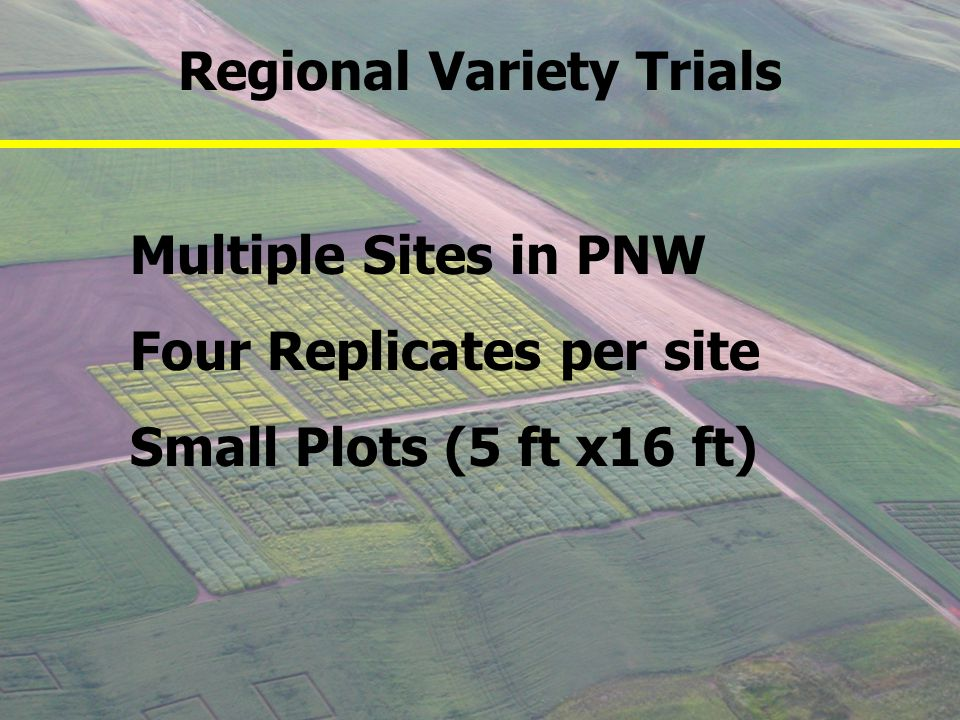Multiple Sites in PNW Four Replicates per site Small Plots (5 ft x16 ft) Regional Variety Trials