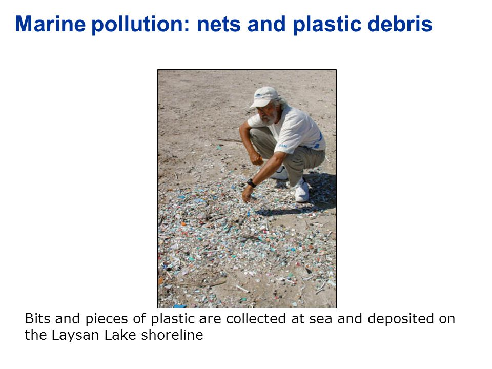 Laysan Island Marine pollution: nets and plastic debris