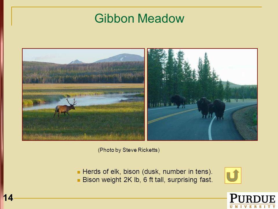14 Gibbon Meadow Herds of elk, bison (dusk, number in tens).