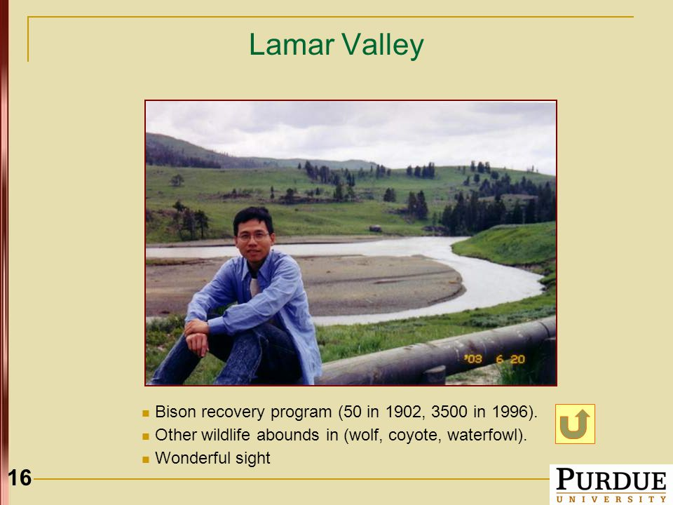 16 Lamar Valley Bison recovery program (50 in 1902, 3500 in 1996).
