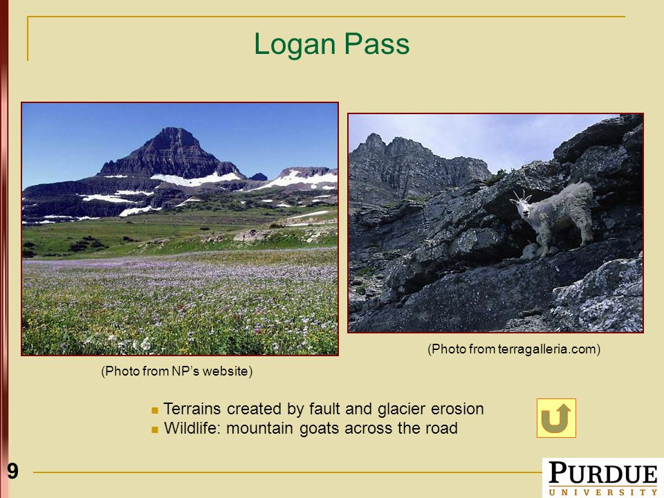 9 Logan Pass Terrains created by fault and glacier erosion Wildlife: mountain goats across the road (Photo from NP's website) (Photo from terragalleria.com)