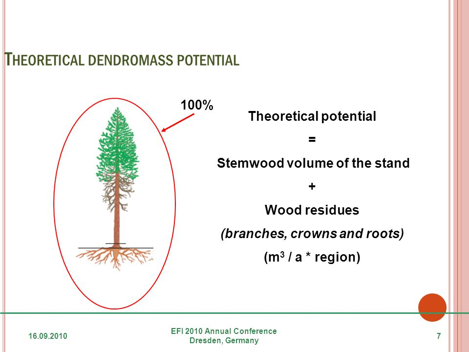 T HEORETICAL DENDROMASS POTENTIAL 16.09.2010 EFI 2010 Annual Conference Dresden, Germany 7 Theoretical potential = Stemwood volume of the stand + Wood residues (branches, crowns and roots) (m 3 / a * region) 100%