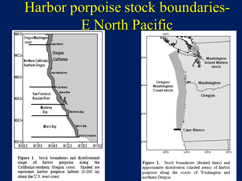 Harbor porpoise stock boundaries- E North Pacific
