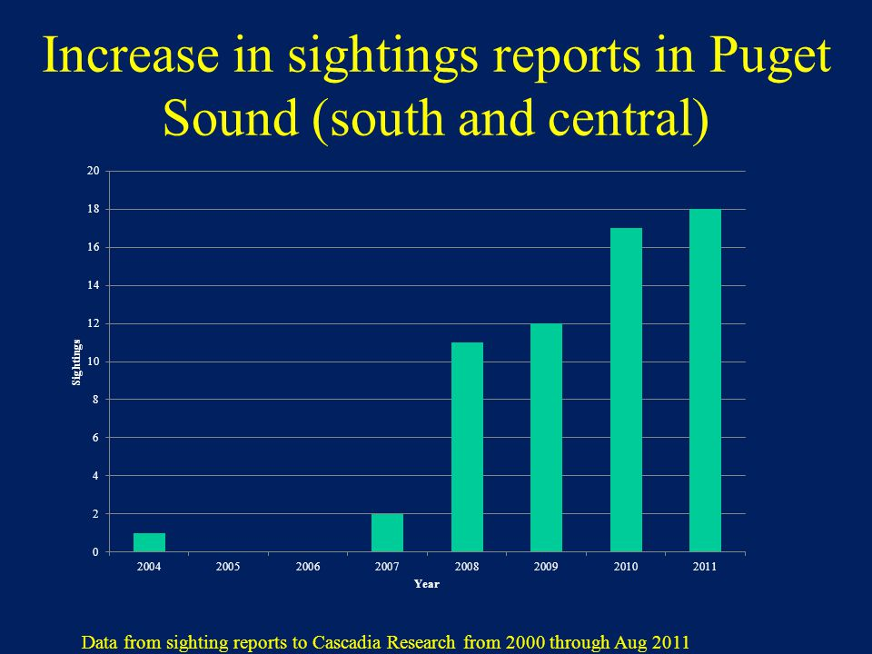 Increase in sightings reports in Puget Sound (south and central) Data from sighting reports to Cascadia Research from 2000 through Aug 2011