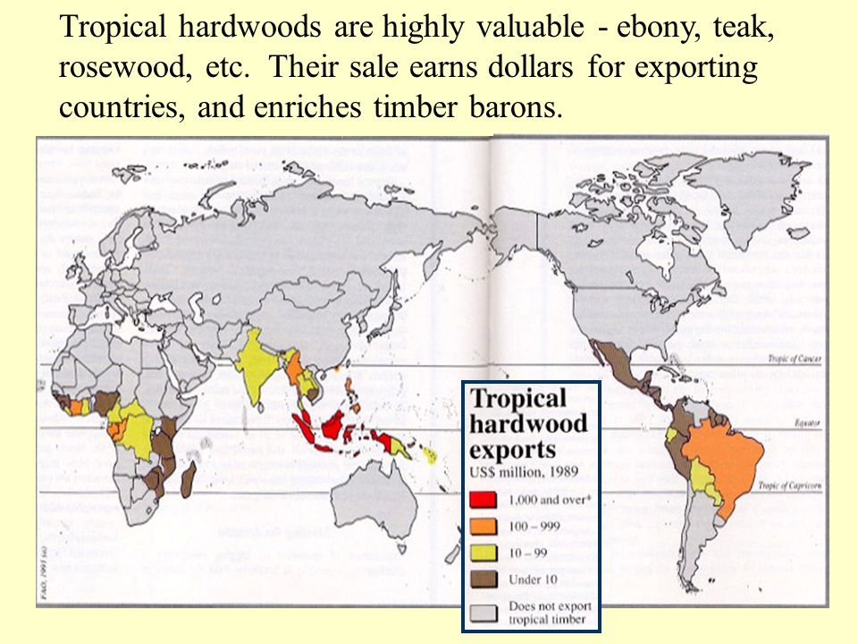 Tropical hardwoods are highly valuable - ebony, teak, rosewood, etc. Their sale earns dollars for exporting countries, and enriches timber barons.