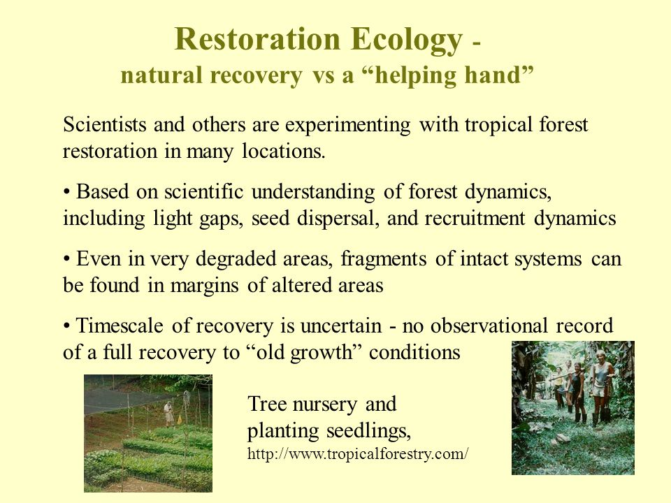 Scientists and others are experimenting with tropical forest restoration in many locations. Based on scientific understanding of forest dynamics, incl