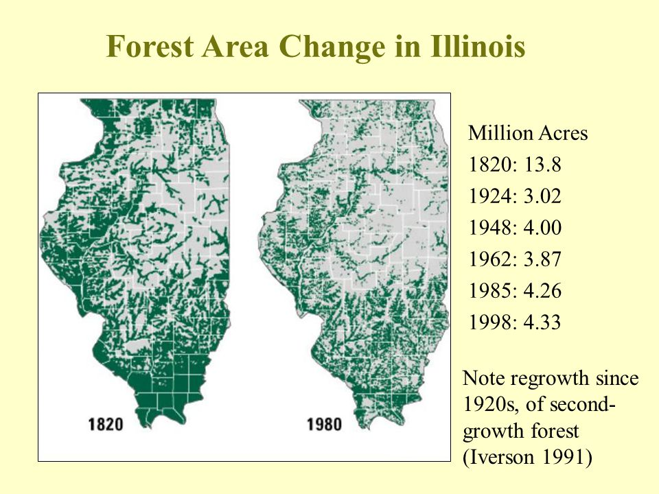 Note regrowth since 1920s, of second- growth forest (Iverson 1991) Forest Area Change in Illinois Million Acres 1820: 13.8 1924: 3.02 1948: 4.00 1962: