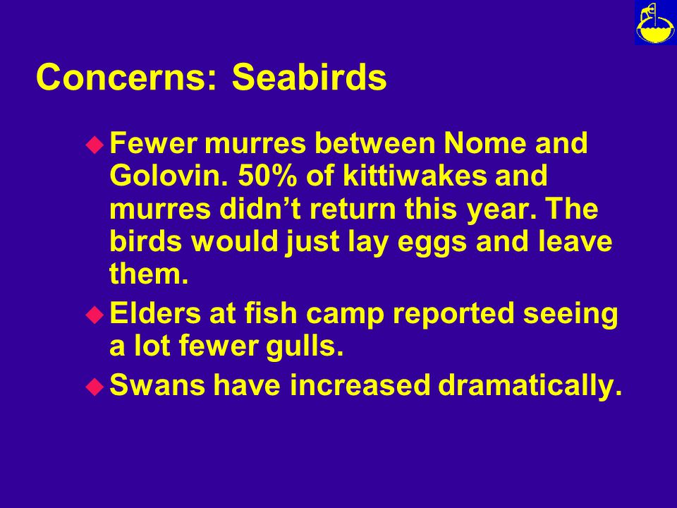 Concerns: Seabirds u Fewer murres between Nome and Golovin.