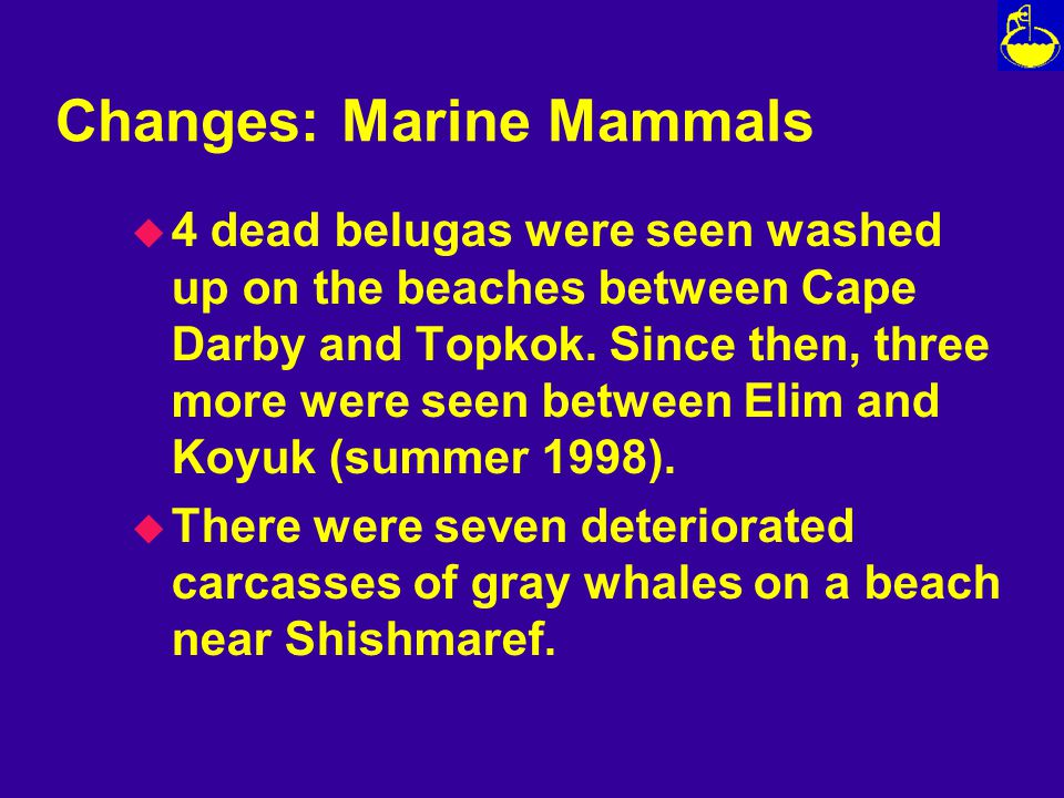 Changes: Marine Mammals u 4 dead belugas were seen washed up on the beaches between Cape Darby and Topkok.