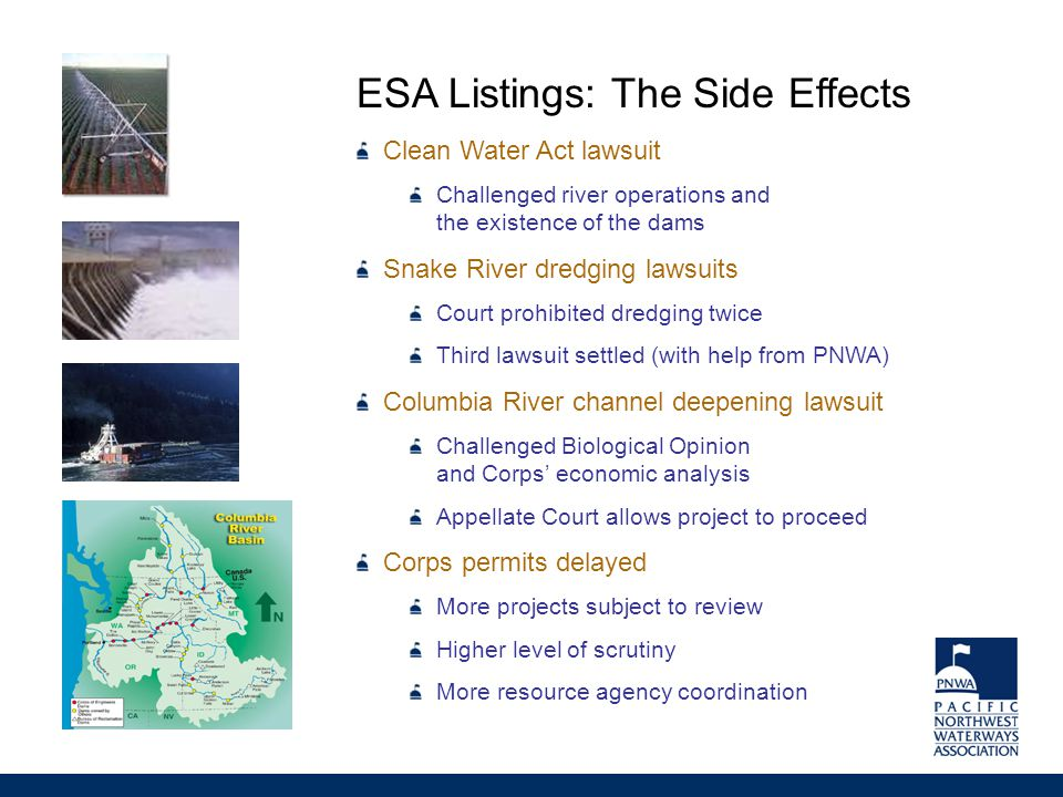ESA Listings: The Side Effects Clean Water Act lawsuit Challenged river operations and the existence of the dams Snake River dredging lawsuits Court prohibited dredging twice Third lawsuit settled (with help from PNWA) Columbia River channel deepening lawsuit Challenged Biological Opinion and Corps' economic analysis Appellate Court allows project to proceed Corps permits delayed More projects subject to review Higher level of scrutiny More resource agency coordination
