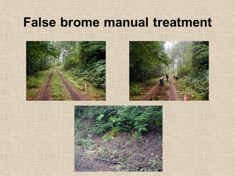 False brome manual treatment