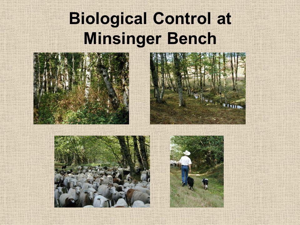 Biological Control at Minsinger Bench