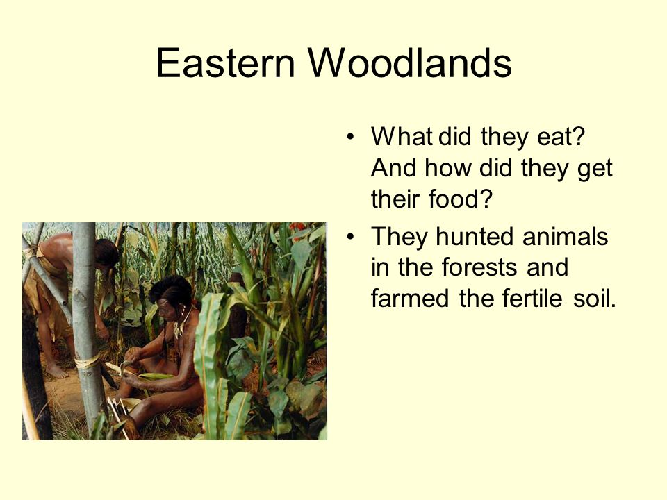 Eastern Woodlands What did they eat. And how did they get their food.