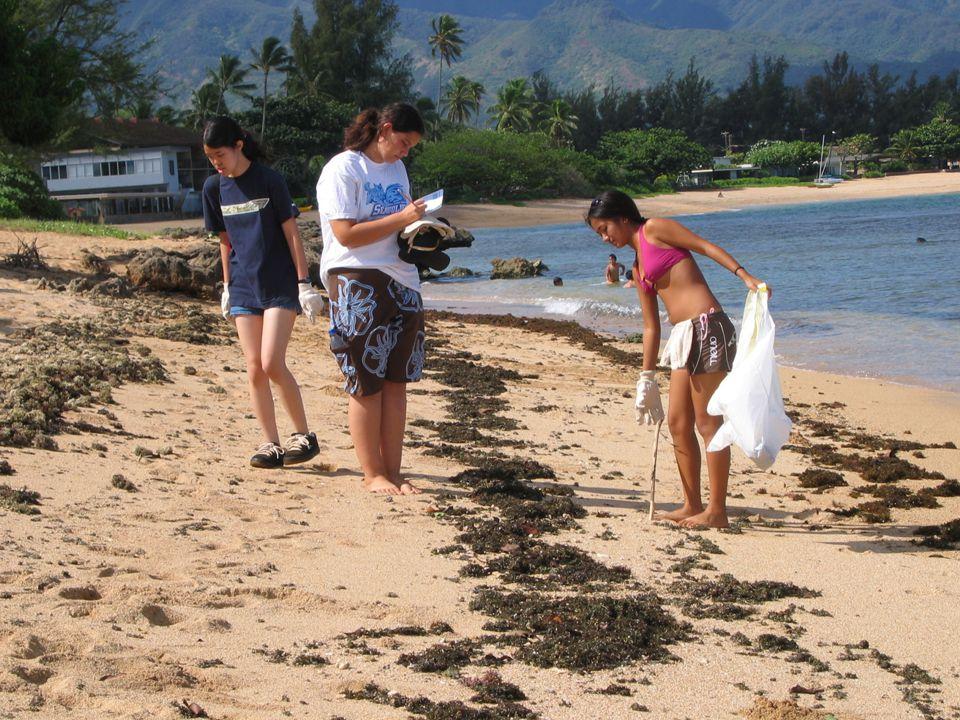 Volunteers clean up marine debris on Oahu every year!