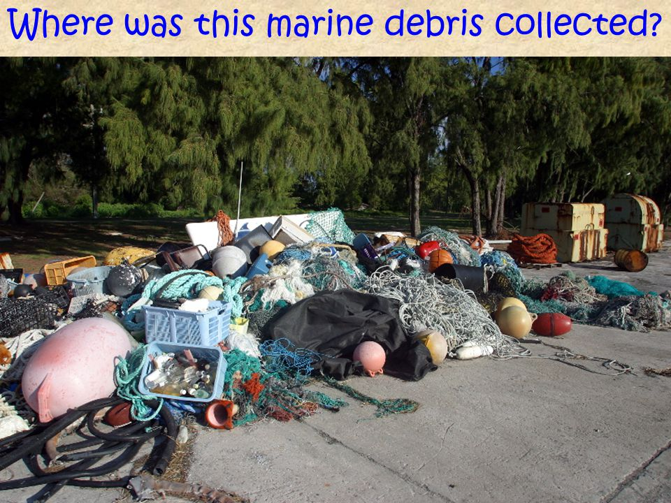 Where was this marine debris collected?