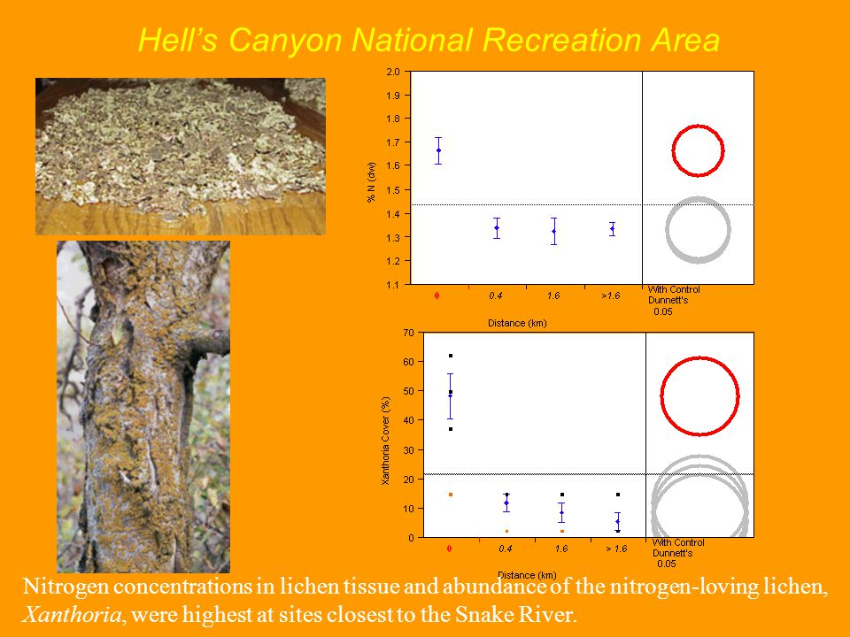 Hell's Canyon National Recreation Area Nitrogen concentrations in lichen tissue and abundance of the nitrogen-loving lichen, Xanthoria, were highest at sites closest to the Snake River.