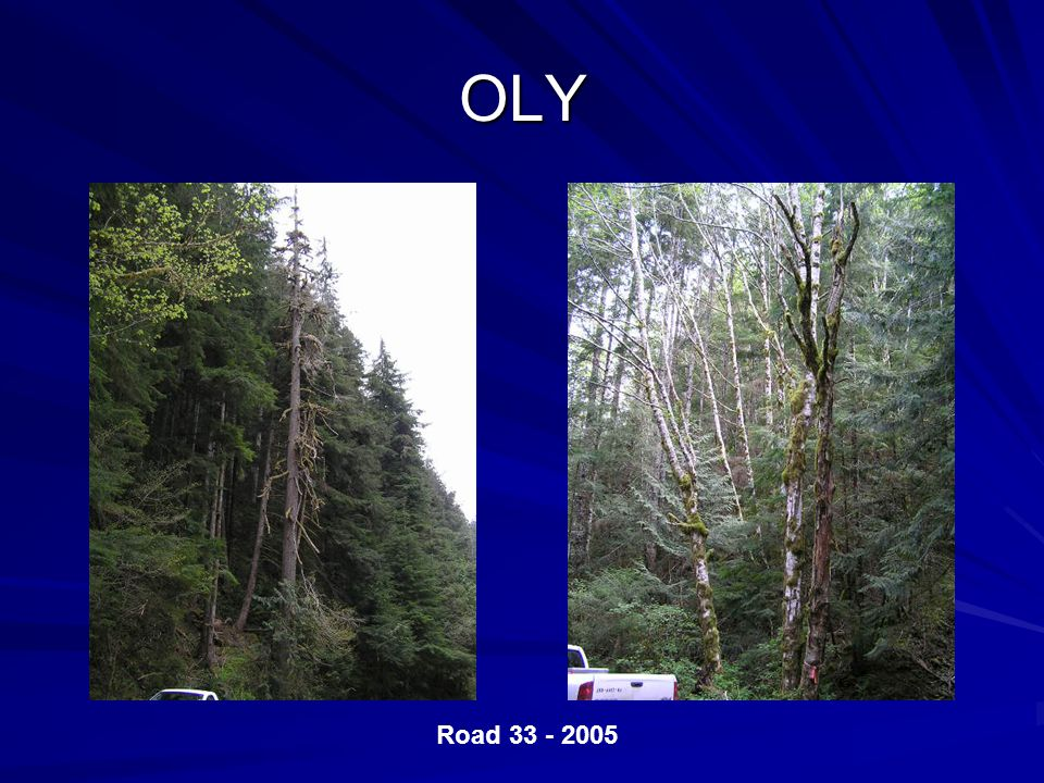 OLY Road 33 - 2005