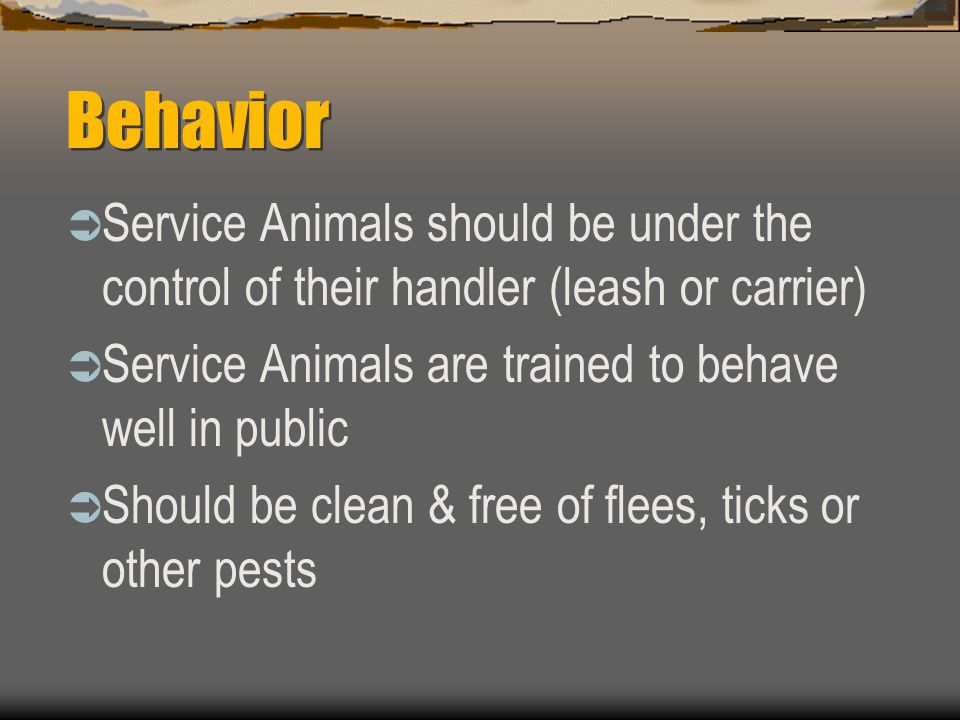 Behavior  Service Animals should be under the control of their handler (leash or carrier)  Service Animals are trained to behave well in public  Sh