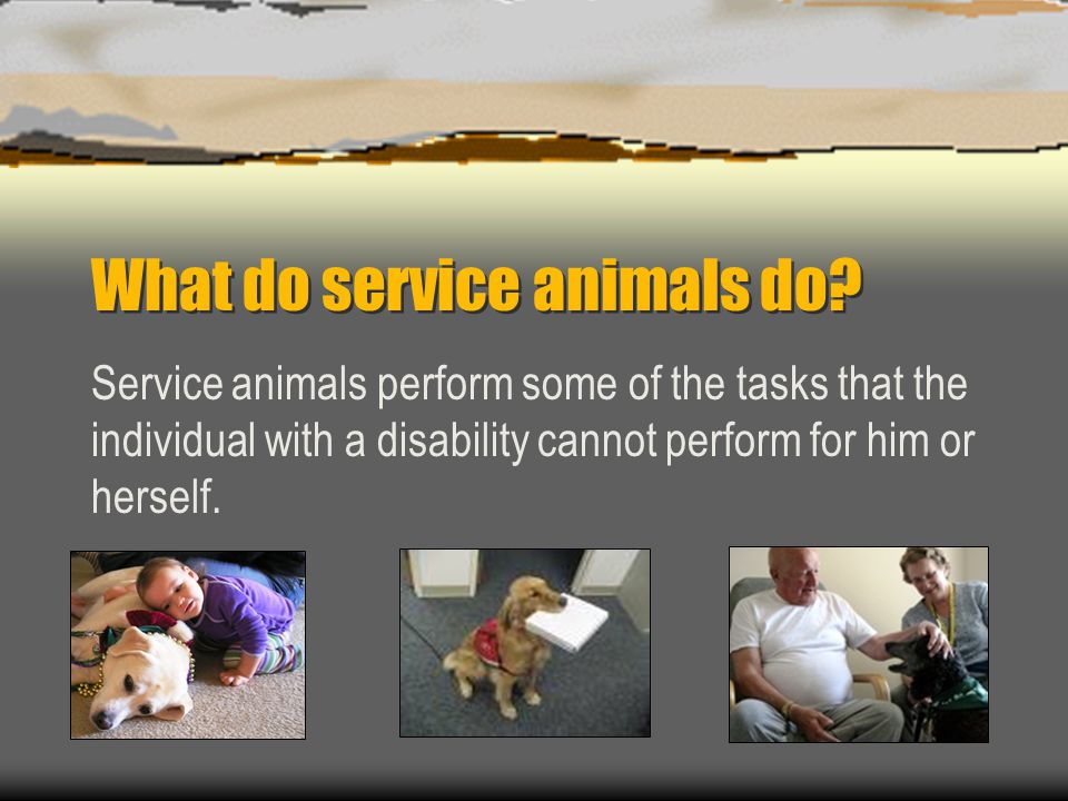 What do service animals do? Service animals perform some of the tasks that the individual with a disability cannot perform for him or herself.