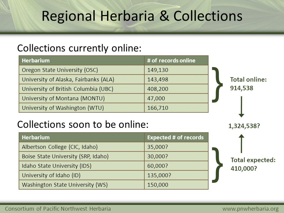 Regional Herbaria & Collections Consortium of Pacific Northwest Herbariawww.pnwherbaria.org Collections currently online: Herbarium# of records online Oregon State University (OSC)149,130 University of Alaska, Fairbanks (ALA)143,498 University of British Columbia (UBC)408,200 University of Montana (MONTU)47,000 University of Washington (WTU)166,710 Collections soon to be online: Total online: 914,538 Total expected: 410,000.