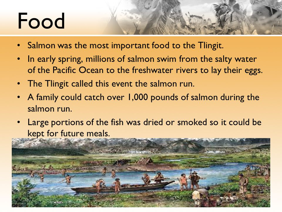 Food Salmon was the most important food to the Tlingit.