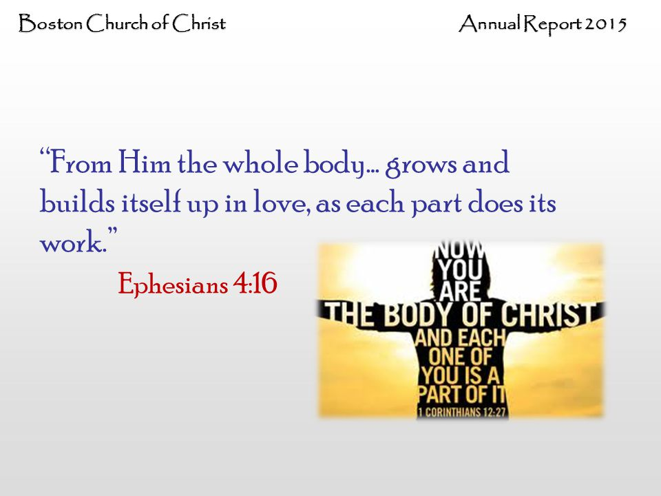Boston Church of Christ Annual Report 2015 From Him the whole body… grows and builds itself up in love, as each part does its work. Ephesians 4:16