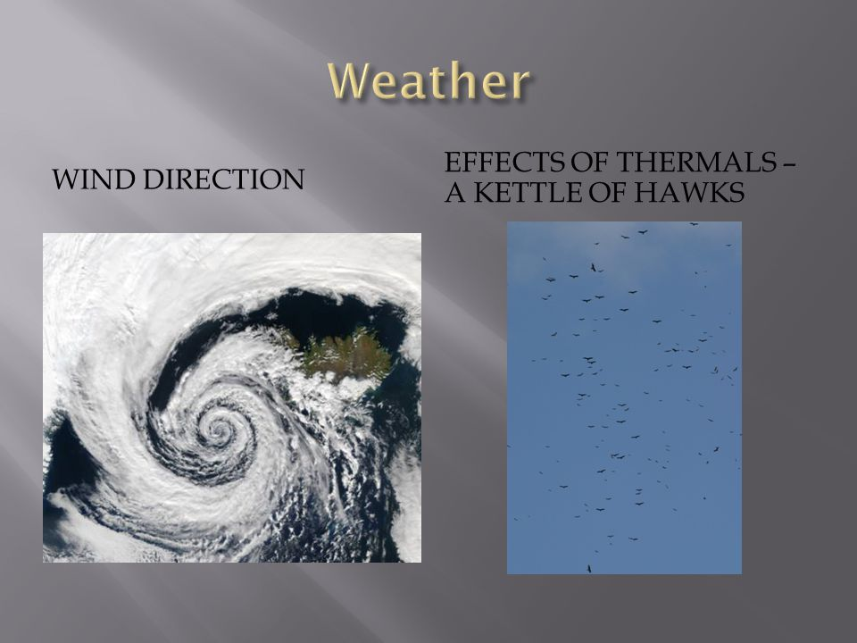 WIND DIRECTION EFFECTS OF THERMALS – A KETTLE OF HAWKS