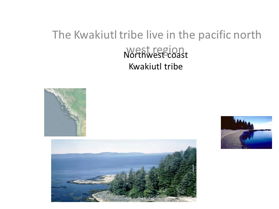 Northwest coast Kwakiutl tribe The Kwakiutl tribe live in the pacific north west region.