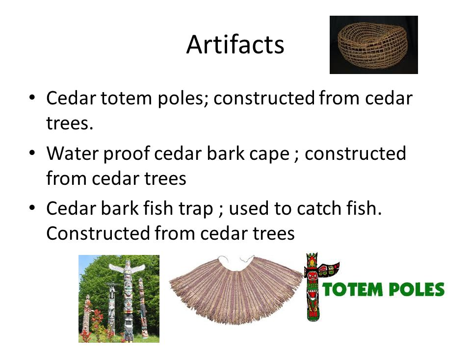 Artifacts Cedar totem poles; constructed from cedar trees. Water proof cedar bark cape ; constructed from cedar trees Cedar bark fish trap ; used to c