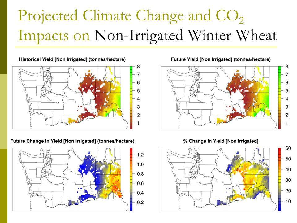 Projected Climate Change and CO 2 Impacts on Non-Irrigated Winter Wheat