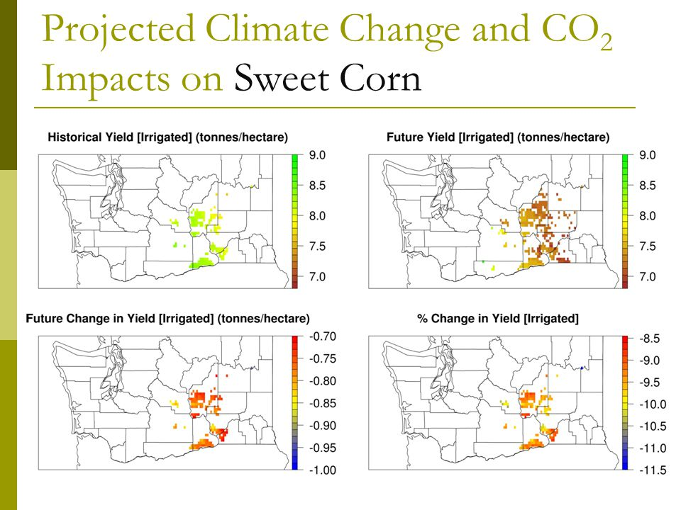 Projected Climate Change and CO 2 Impacts on Sweet Corn
