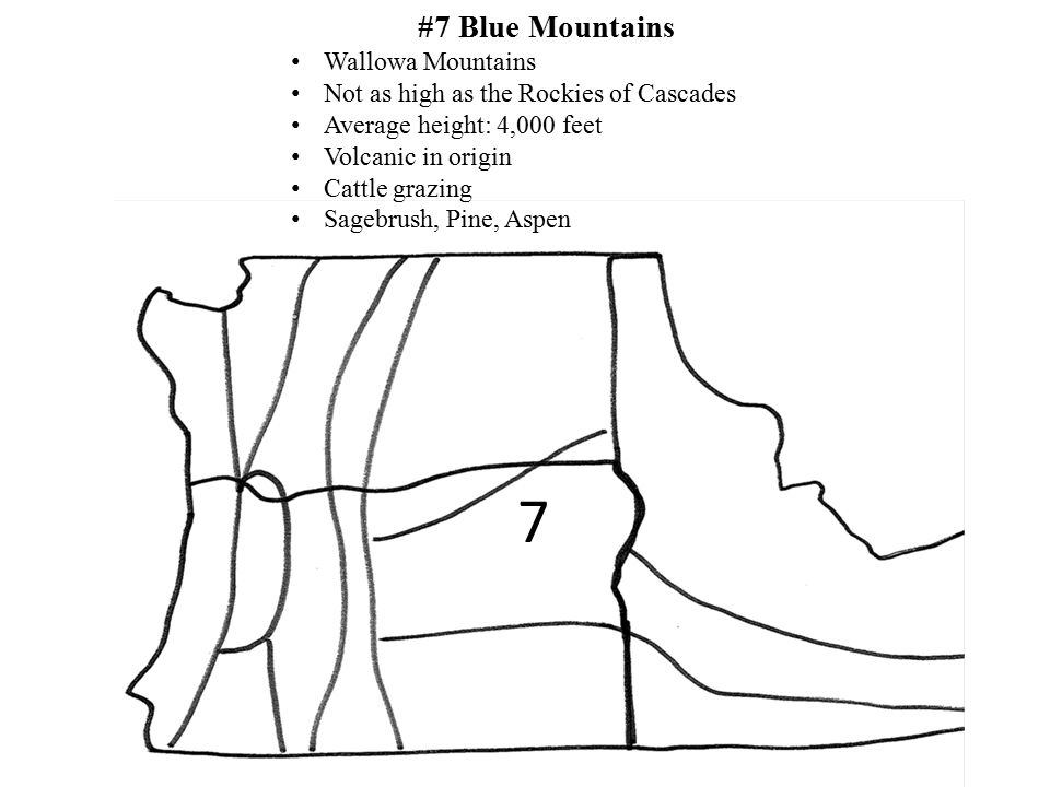 7 #7 Blue Mountains Wallowa Mountains Not as high as the Rockies of Cascades Average height: 4,000 feet Volcanic in origin Cattle grazing Sagebrush, P