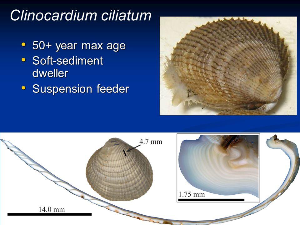 Clinocardium ciliatum 50+ year max age 50+ year max age Soft-sediment dweller Soft-sediment dweller Suspension feeder Suspension feeder