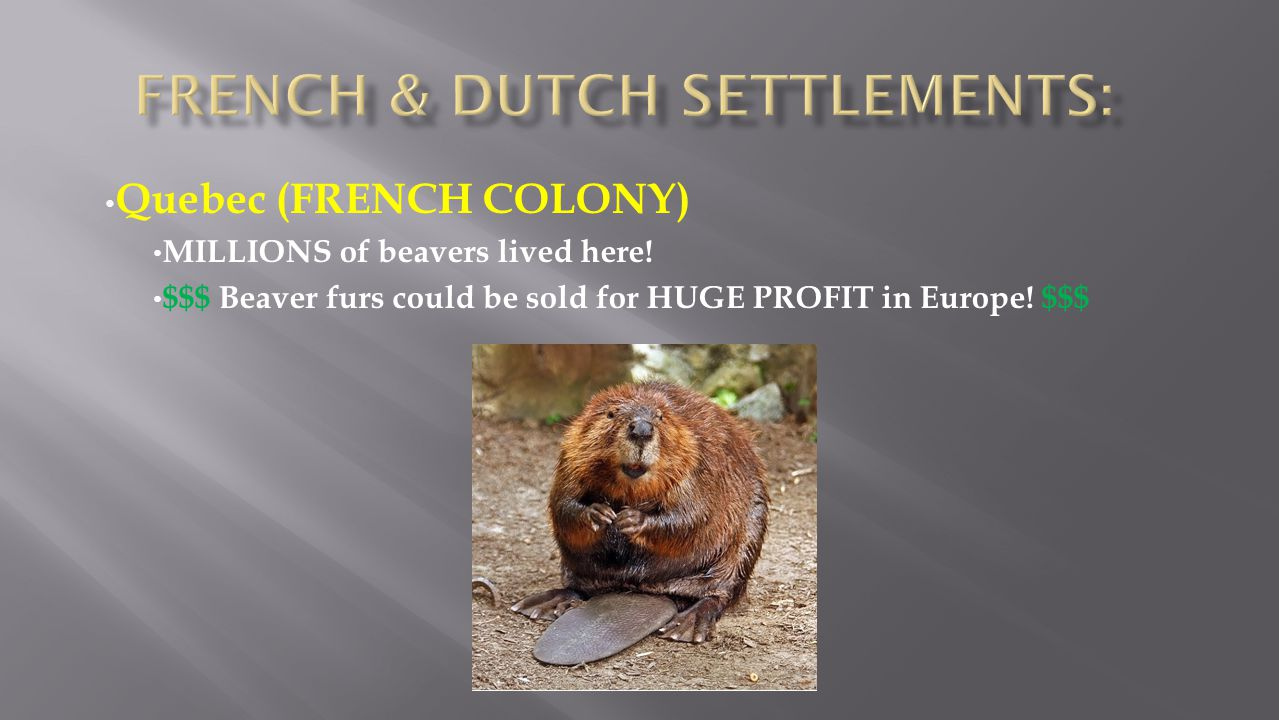 Quebec (FRENCH COLONY) MILLIONS of beavers lived here! $$$ Beaver furs could be sold for HUGE PROFIT in Europe! $$$