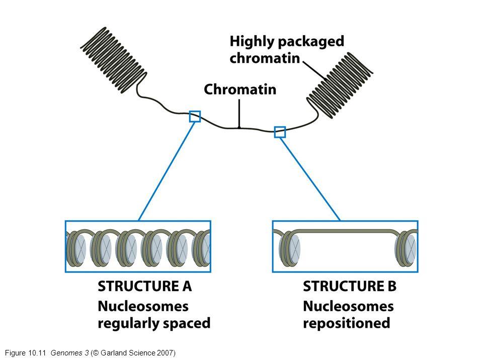 Figure 10.11 Genomes 3 (© Garland Science 2007)