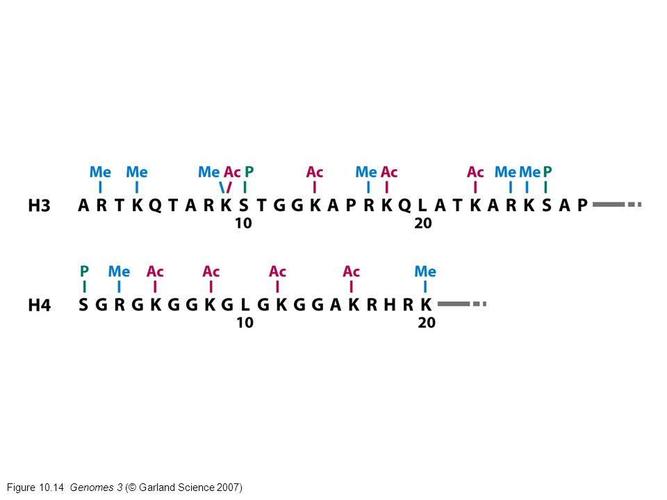 Figure 10.14 Genomes 3 (© Garland Science 2007)