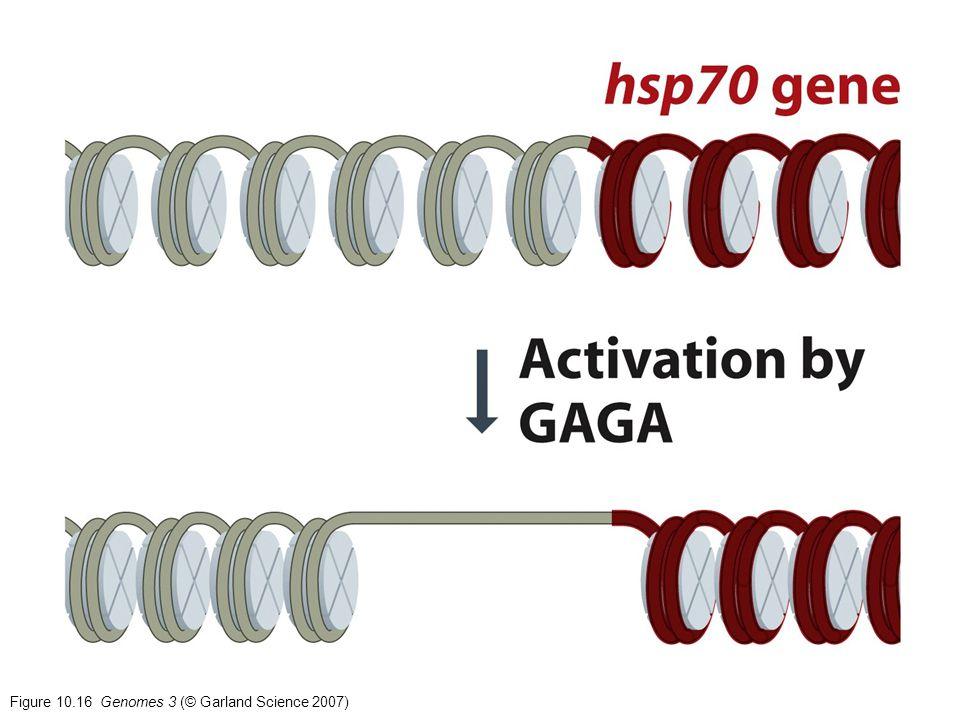 Figure 10.16 Genomes 3 (© Garland Science 2007)