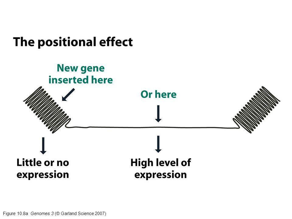 Figure 10.8b Genomes 3 (© Garland Science 2007)