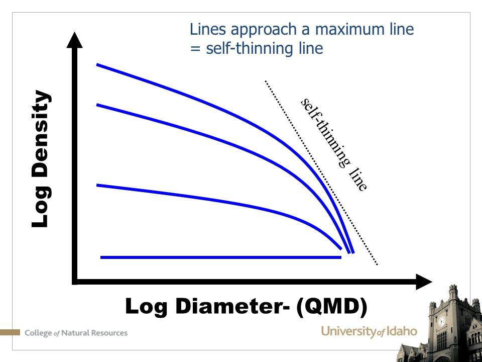 Log Density Log Diameter- (QMD) Lines approach a maximum line = self-thinning line self-thinning line