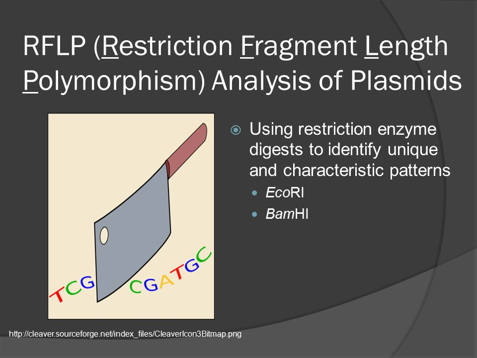 RFLP (Restriction Fragment Length Polymorphism) Analysis of Plasmids  Using restriction enzyme digests to identify unique and characteristic patterns