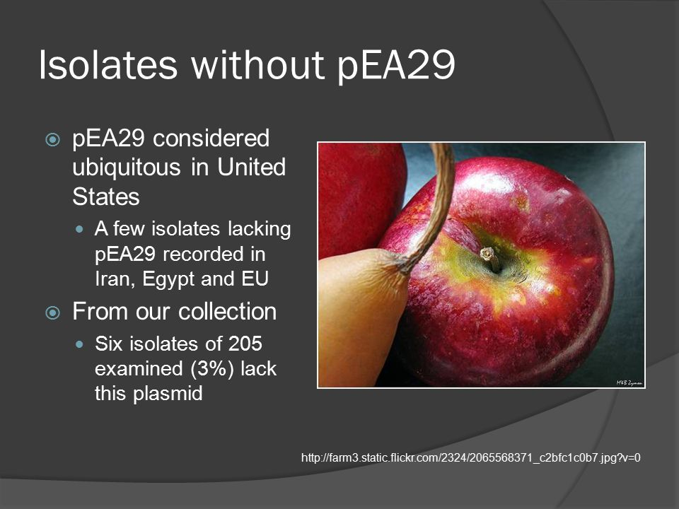Isolates without pEA29  pEA29 considered ubiquitous in United States A few isolates lacking pEA29 recorded in Iran, Egypt and EU  From our collection Six isolates of 205 examined (3%) lack this plasmid http://farm3.static.flickr.com/2324/2065568371_c2bfc1c0b7.jpg?v=0