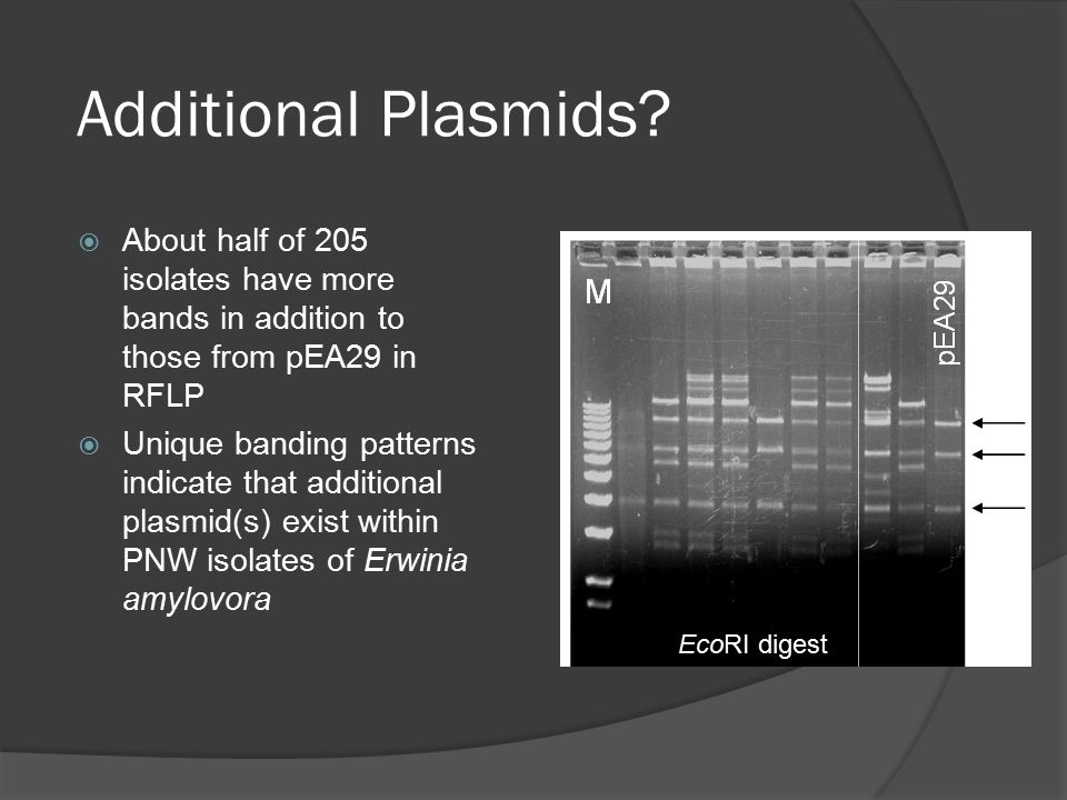 Additional Plasmids.