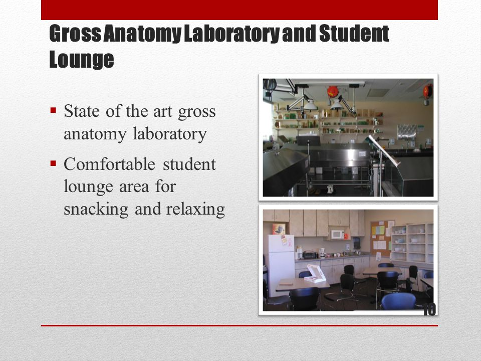 Gross Anatomy Laboratory and Student Lounge  State of the art gross anatomy laboratory  Comfortable student lounge area for snacking and relaxing 10